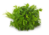 Bunch of ripe parsley isolated — Stock Photo
