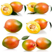 Collection of ripe mango fruits with leaves — Stock Photo