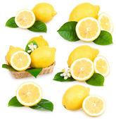 Set of ripe lemon fruits isolated — Stock Photo