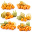 Set of cape gooseberry (physalis) isolated — Stock Photo #4962196