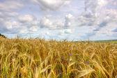 Beautiful summer landscape (HDR image) — Stock Photo