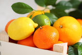 Fresh citrus fruits in the box — Stock Photo