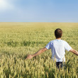 Man in wheat field — Stock Photo