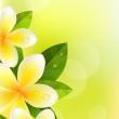 Tropic fond de frangipaniers — Vecteur