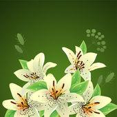 Witte lelies op groene achtergrond — Stockvector