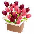 Open box full of tulips - Stock Vector