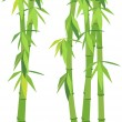 Green bamboo — Stock Vector
