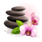 Spa stones and orchid — Stock Vector