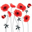 Red poppy - Stock Vector