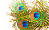 Bright feathers of a peacock close up — Stock Photo