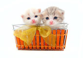 Two small kittens in a basket — Stock Photo