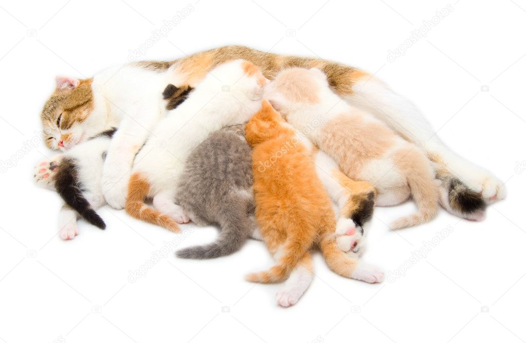 The cat which feeds the five kittens — Stock Photo #4868872