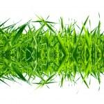 Grass desire — Stock Photo