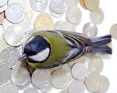 The rich great tit — Stock Photo