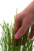 Touching grass — Stock Photo