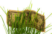 Dollar Bills Stashed In Green Grass — Stock Photo