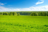 Summer landscape — Stockfoto