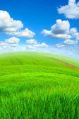 Summer landscape — Foto Stock