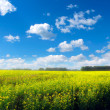Stock Photo: Beautiful summer landscape