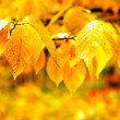 Autumn foliage — Stock Photo #5355415