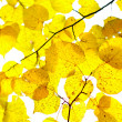 Autumn foliage — Stock Photo #5355489