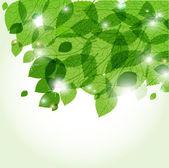 Feuilles vertes fraîches et lumières. contexte écologique vecteur — Vecteur