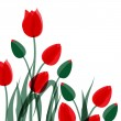 Stok Vektör: Red tulips isolated over white