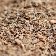 Mulch — Stock Photo #3930081