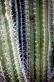 Aloe plant. — Stock Photo
