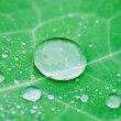 Water drops on fresh green leaves — Stock Photo #3948840
