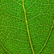 Leaf of a plant close up - Foto de Stock