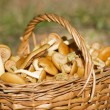 Basket with mushrooms in forest - Stock Photo