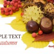 Stock Photo: Autumn leaves and fruits isolated on white background