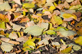 Autumn leaves on the earth — Stockfoto