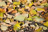 Folhas de outono na terra — Foto Stock