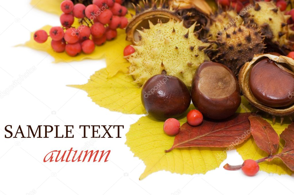 Autumn leaves and fruits isolated on white background   Stock Photo #4063628
