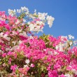 Stock Photo: Beautiful tropical flowers against the sky