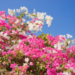 Beautiful tropical flowers against the sky — Stock Photo