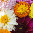 Multi colored flowers pattern background — Stock Photo