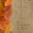 Autumn Leaves over Burlap background - Stock Photo