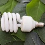lâmpada de poupança em folhas verdes de energia — Foto Stock