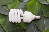 Energy saving light bulb on green leaves — Stock Photo