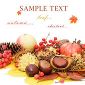 Autumn leaves and fruits isolated on white background — Stok fotoğraf
