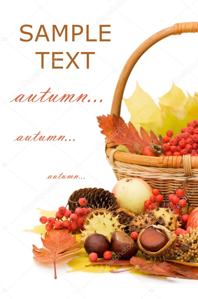 Autumn leaves and fruits isolated on white background  Stock Photo #4416365