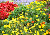 Colourful flowers as a background — Stock Photo