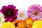 Beautiful flowers isolated on white background — Stock Photo
