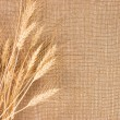 Wheat Ears border on Burlap background - Stock Photo