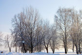 Winter snow branches of tree on a blue sky background — Stock Photo