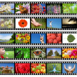 Film strip with different photos - life and nature - Stok fotoğraf