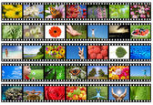 Film strip with different photos - life and nature — Photo